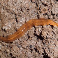 Detectan una nueva especie invasora en el parque de la Albufera
