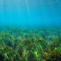 La recuperación de las praderas marinas se hace visible en Europa
