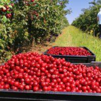 Cinco claves de la ONU para lograr un eficiente sistema alimentario