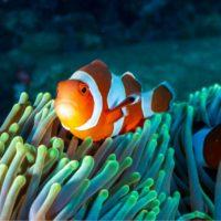 La población desconoce el significado de la palabra 'biodiversidad'