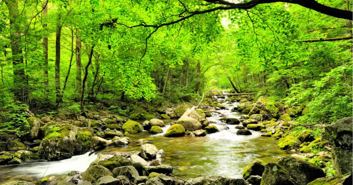Los suelos de los bosques mejoran con la gestión ecohidrológica ...