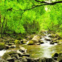 Los suelos de los bosques mejoran con la gestión ecohidrológica