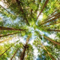 El mundo puede reforestar una superficie igual a EEUU