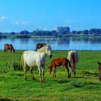 La UNESCO vigilará el uso del agua en Doñana