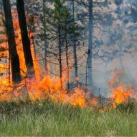 """Bruselas advierte de un """"riesgo elevado"""" de incendios este verano"""