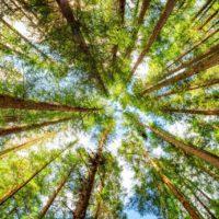 Plantar 3.000 millones de árboles en la UE para 2030