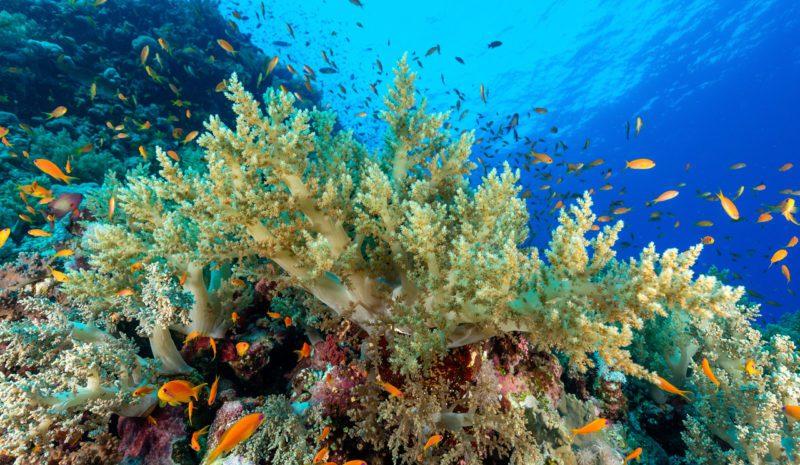 La contaminación marina provoca la muerte de los corales