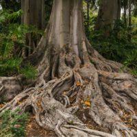 Plantas con raíces más grandes para combatir el cambio climático