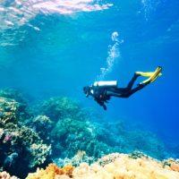 Biólogos y buceadores, contra la desertificación de los fondos marinos