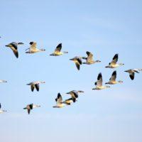 Las aves anticiparán desastres naturales a través de la Estación Espacial Internacional