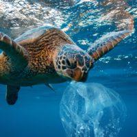 El Atlántico alberga diez veces más plástico de lo pensado