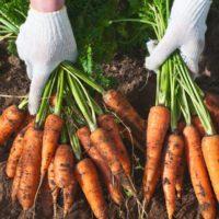 Los alimentos ecológicos ganan peso en la cesta de la compra