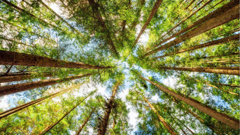 Una herramienta española para medir el valor económico de la naturaleza