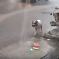 Spike, el perro que recoge basura en las inundaciones de Monterrey