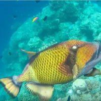 La sobrepesca y la crisis climática provocan el aumento de mercurio en el pescado