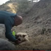 Rescatan a un perro exhausto del incendio de Gran Canaria