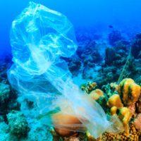 El impacto humano sobre los océanos se duplica cada década