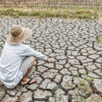 Poner freno a la desertificación es vital para combatir la emergencia climática
