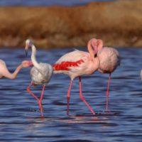 El Parque Nacional de Doñana celebra sus primeros 50 años de vida