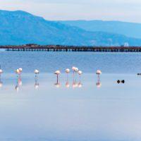 Los flamencos del Delta del Ebro baten el récord de crías con 2.201 pollos