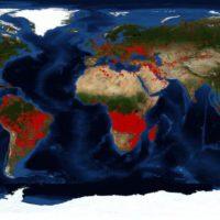 Ecología del fuego: cuando las llamas dan o quitan vida