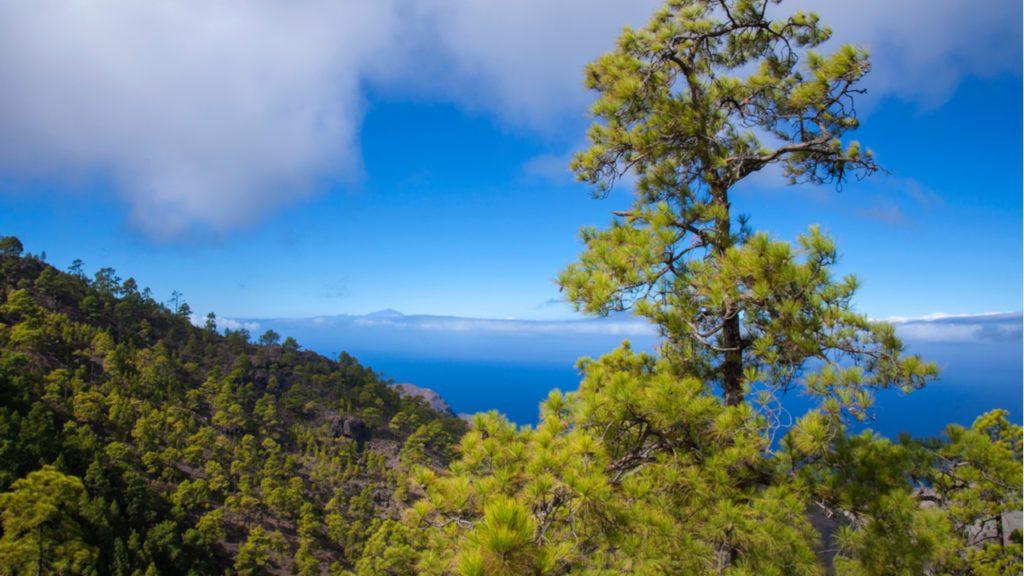 Parque Nartural de Tamadaba. Gran Canaria