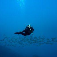 Cuando la ciencia y la ciudadanía se unen para salvar el mar