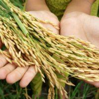 Frenar el cambio climático exige cambiar la dieta a nivel global