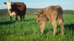 alimentar, salud, saludable, carne, sostenibilidad