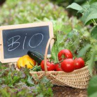 La superficie de cultivos ecológicos crece un 2,9%