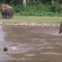 Un elefante salva a un hombre en una riada