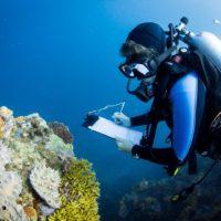 Tres estrategias para salvar los arrecifes de coral del Indo-Pacífico