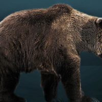 El humano extinguió al oso de las cavernas