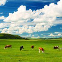 El cambio climático transforma la identidad de los pastizales