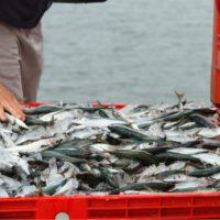La sobrepesca y la crisis climática, artífices del aumento de mercurio en el pescado
