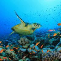 Nuevo paso para el Tratado Global de los Océanos