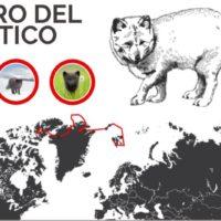 El viaje de un zorro ártico entre Noruega y Canadá de más de 4.000 km
