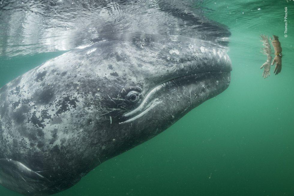Las mejores fotos del Wildlife Photographer of the Year 2019