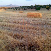 El cambio climático reducirá un 50% el secano en Europa