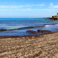 """Posidonia: elegir entre playas """"sucias"""" o playas vivas"""