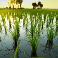 La sal amenaza ya al 20% de los suelos agrícolas del planeta