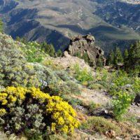 Gran Canaria resurge de sus cenizas dos años después
