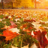 El otoño será hasta un grado más cálido de lo habitual