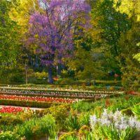 Botánica y pintura convergen en el Real Jardín Botánico