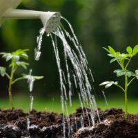 El CSIC identifica una proteína que alivia la sed de las plantas