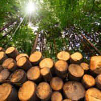La correcta gestión de los bosques, esencial para reducir el CO2