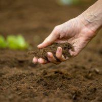 Bruselas destaca el papel de la agricultura como sumidero de carbono