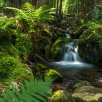 La mitad de las aguas subterráneas no podrá mantener ecosistemas acuáticos en 2050