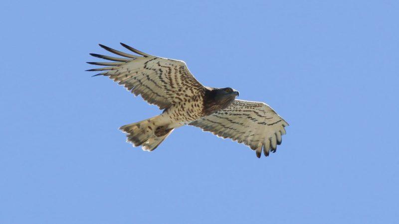 La crisis climática corta las alas a las aves migratorias