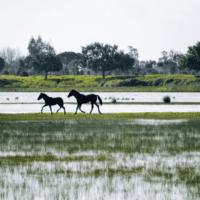 Las inundaciones costeras afectarán a 200.000 españoles en 2050